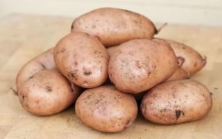 Описание сорта Жуковский ранний: почему стоит посадить именно этот картофель