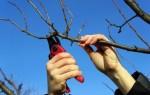 Как можно реанимировать старую яблоню: способы обрезки