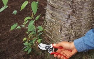 Советы и рекомендации: как удалить молодую поросль деревьев с участка