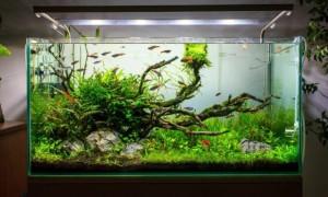 Почему многие называют аквариумы искусственной экосистемой