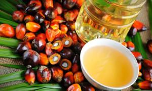 Пальмовое масло: из чего делают и чем оно вредно для здоровья человека