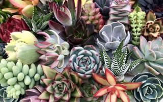 Какой грунт нужен кактусам и суккулентам