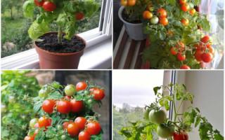 Какие овощи можно вырастить дома на подоконнике