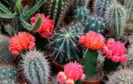 Как можно узнать вид кактуса по внешним признакам