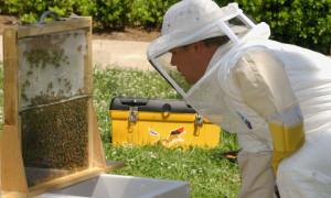 Профилактика и методы борьбы с восковой молью в ульях с пчелами