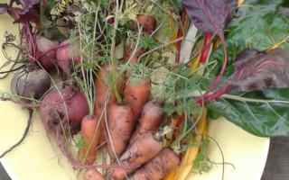 Как сохранить всю зиму морковь и свеклу в домашних условиях
