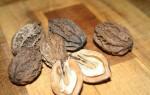 Полезные свойства и вред маньчжурского ореха