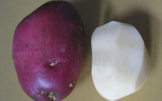 Картофель Рокко: чем он так полюбился дачникам?