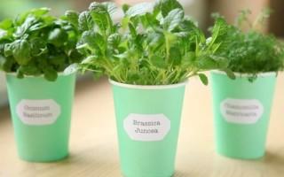 Советы по выращиванию зелени круглый год: огород на подоконнике