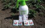 Обработка клубники от вредителей весной: как и чем помочь растению