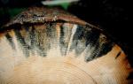 Как избавиться от грибка на дереве: советы от мастеров