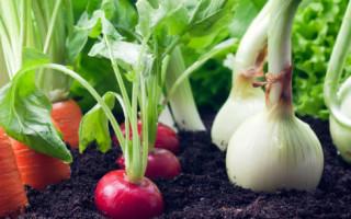 Что можно выращивать зимой в квартире на подоконнике