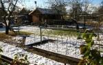 Семена, которые можно посадить под зиму: секреты подзимней посадки