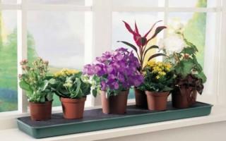 Какие комнатные цветы можно и нельзя держать дома