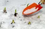 Какие овощи можно успешно сажать под зиму, чтобы собрать богатый урожай