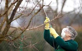 Как обработать сад от вредителей осенью