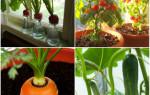 Огород на балконе: очень подробно для начинающих растениеводов