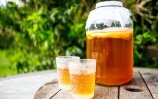 Как настаивать и принимать чайный гриб, чем он полезен