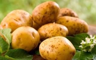 Описание и особенности сорта картофеля Королева Анна