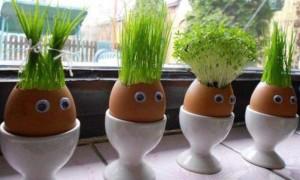 Какую зелень можно вырастить в домашних условиях и что для этого нужно