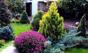 Что лучше посадить на участке рядом с хвойными растениями