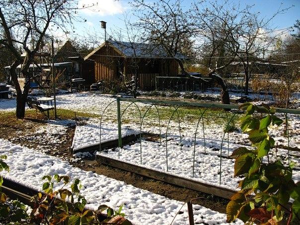 Подзимний посев: как правильно посеять овощи под зиму