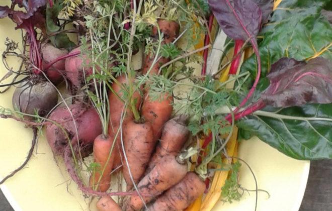 Как хранить морковь, лук, чеснок. Правила хранения картофеля и свеклы. Как хранить овощи в городской квартире зимой