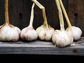 Технология выращивания чеснока в открытый грунт