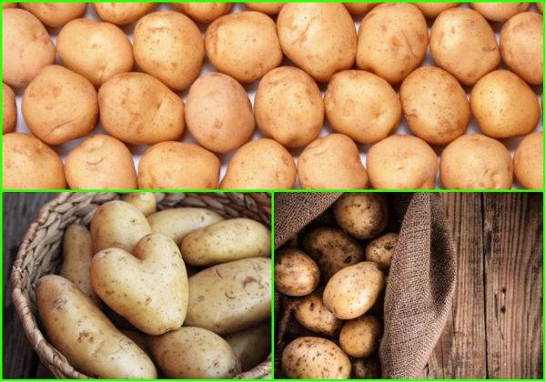 Как хранить картофель чтобы не прорастал